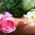 Parc floral d'orléans - côté fleurs