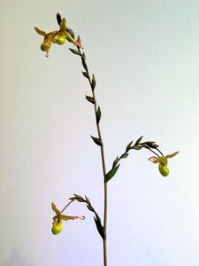 blog_orchid3