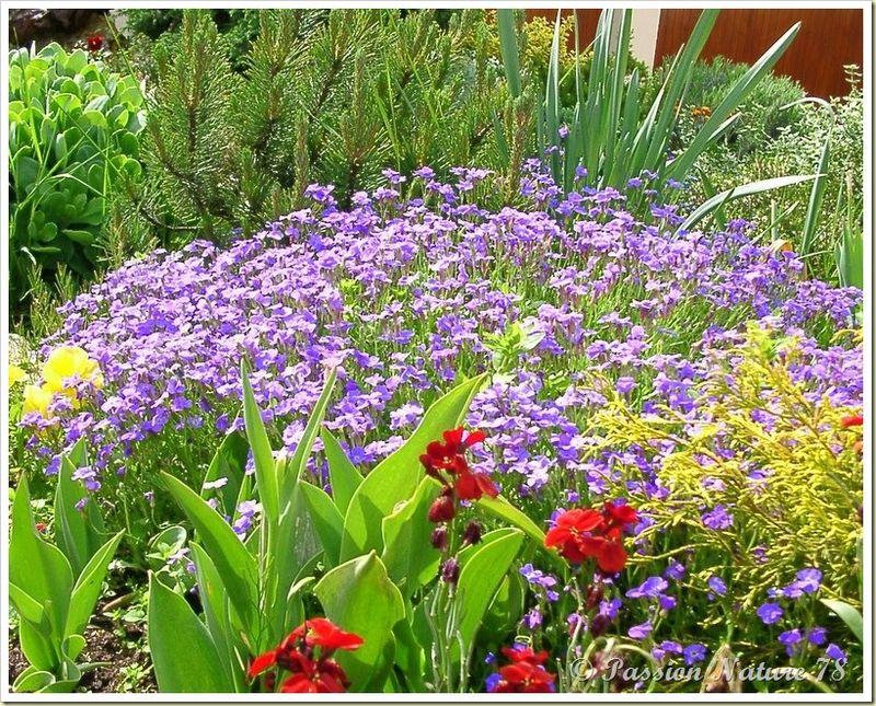 Le jardin de PassionNature78 (4)