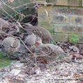 Les Oiseaux de 2008 (12) Décembre au Jardin