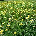 Avec quelques photos du printemps, quelques citations à méditer, je vous souhaite une très belle journée, un agréable week-end !