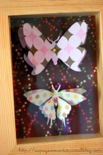 Papillons sous vitrine Au pays des Cactus