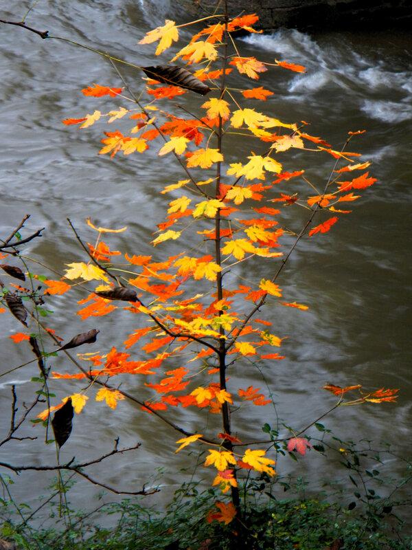arbre sur eau