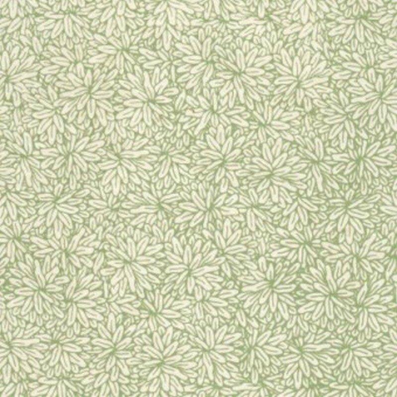 amazonie vert
