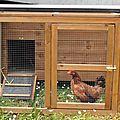 Des poules et les tri des déchets
