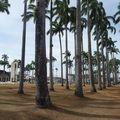 Centre-ville de Cayenne, place des palmistes