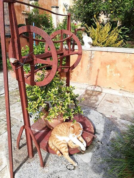 crete chat aghia Triada 2