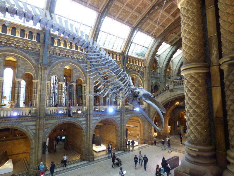 25 Londres Natural History Museum (55)