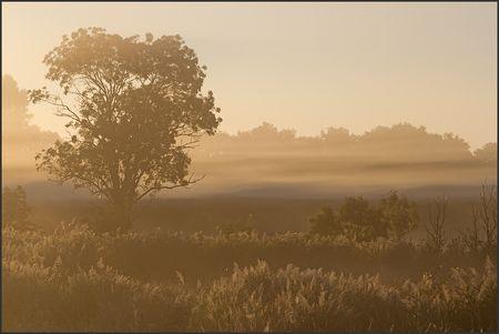 MS_arbre_brume_soleil_levant_210810