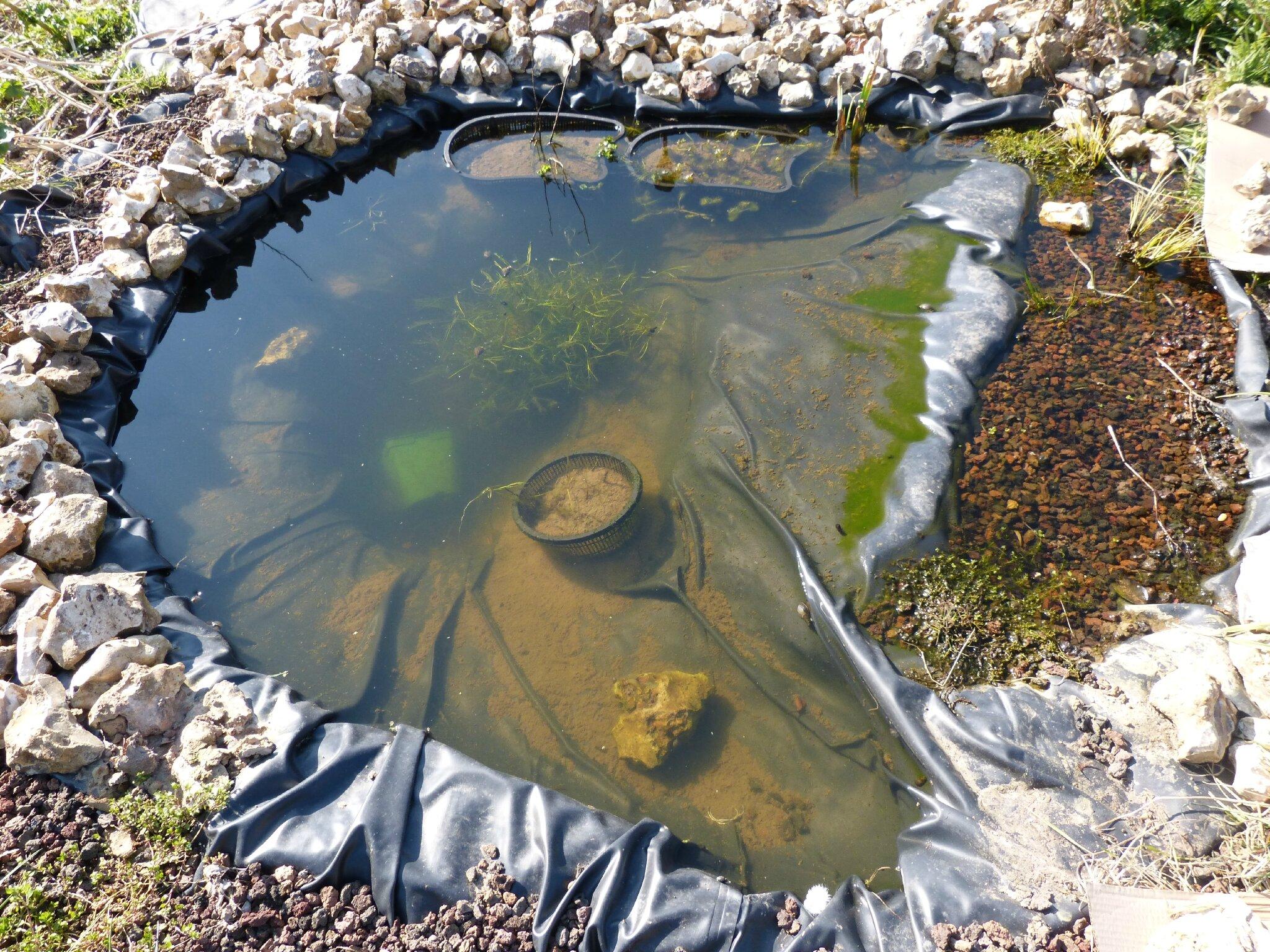 Le petit bassin et la petite reocaille - Notre Jardin Ecologique