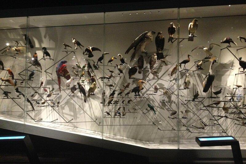 16-ouverture musee des confluences-Lyon