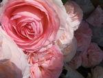 Panier_Roses__6_
