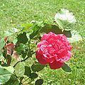 Plantier : un ancêtre des rosiéristes lyonnais