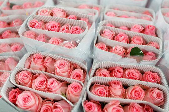 Fleurs_19___chinopsis___Adeline_Cassier