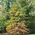 Sous bois jardiné (2ème projet de l' automne hiver)