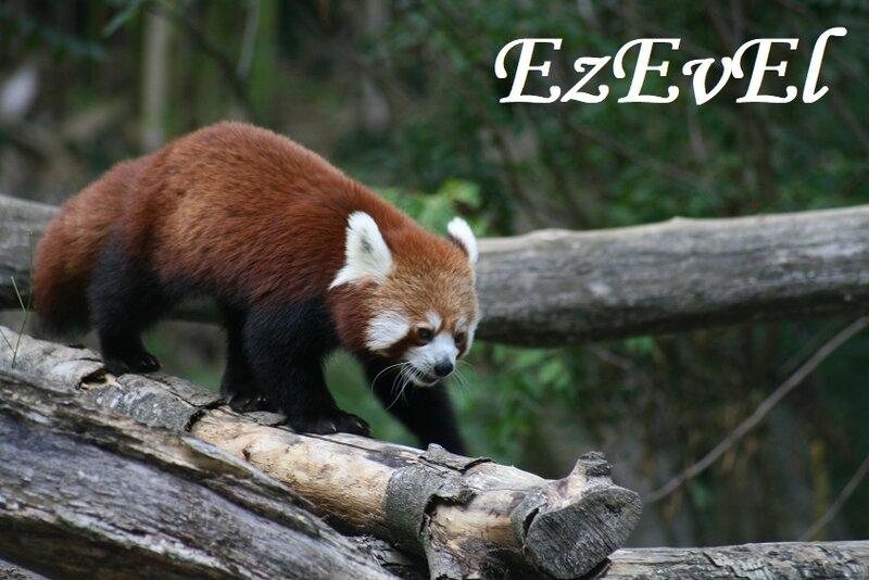 Panda 2 Mulhouse EzEvEl