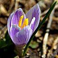 Quête du pollen (9)