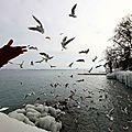 OiseauxChrys_12 13 02_1759