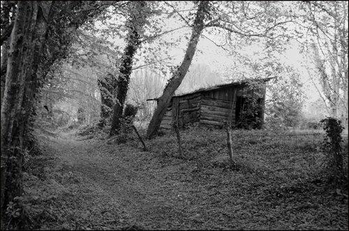 Cabanne-en-forêt-Berry