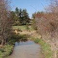 2008 04 07 De l'eau sur le chemin en direction de Freycenet