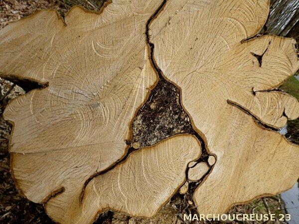 base de tronc