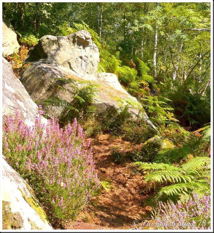 Balade dans la bruyère en forêt de Rambouillet (22)