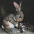 Wild rabbit - claire garland