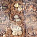 turquie istanbul nid de baKlava
