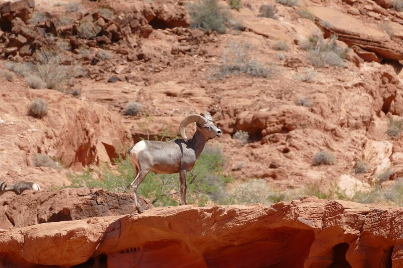 07 14 VALLEY OF FIRE (42)