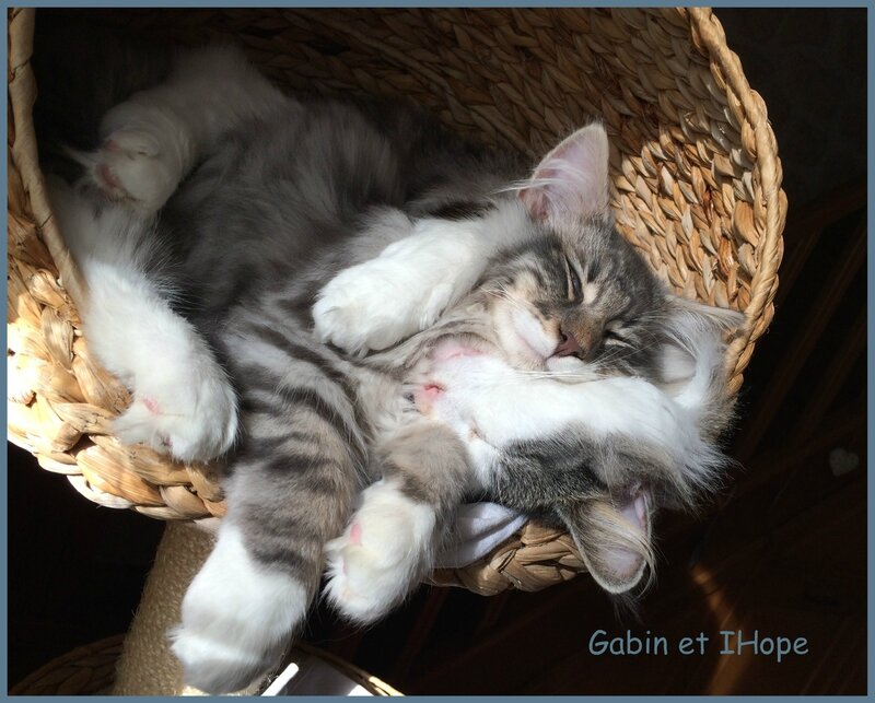Gabin et IHope+