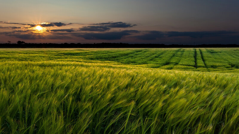 Sunset-landscapes-nature-wheat-fields-dusk_1920x1080