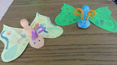 papillonboiteoeufs01