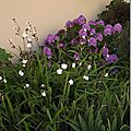 Windows-Live-Writer/jardin_6BD4/DSCF3656_thumb
