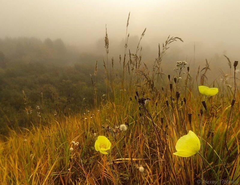 automne fleurs jaunes