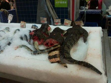 viande_crocodile_560x420