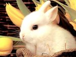 real_2898_rabbit_002