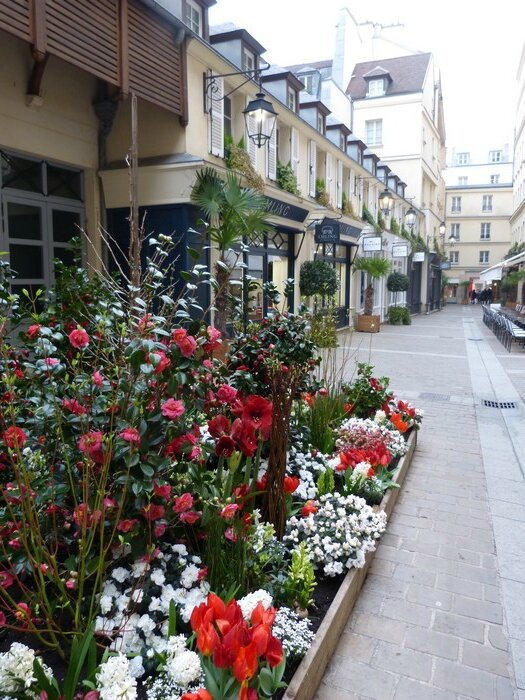 floraison au passage royal