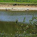 Lac du Broussau 020816