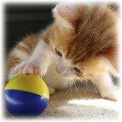 jouet chat (15)
