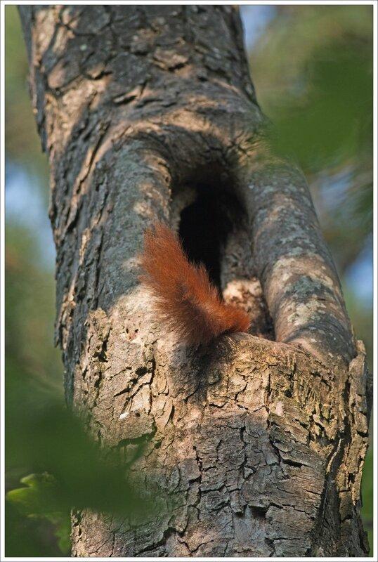 ville JP ecureuil arbre queue 050715 2