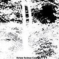 arbrenegatifcopy