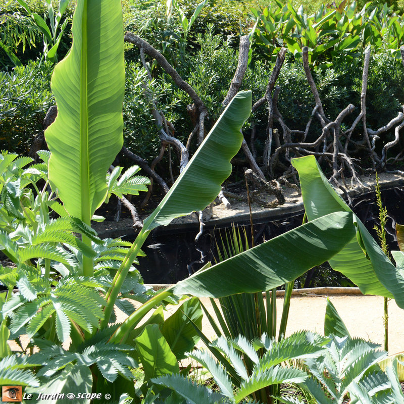 18-Jardin-des-mangroves-2