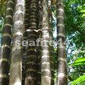 INBIO_palmier à épines