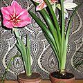 Encore des floraisons