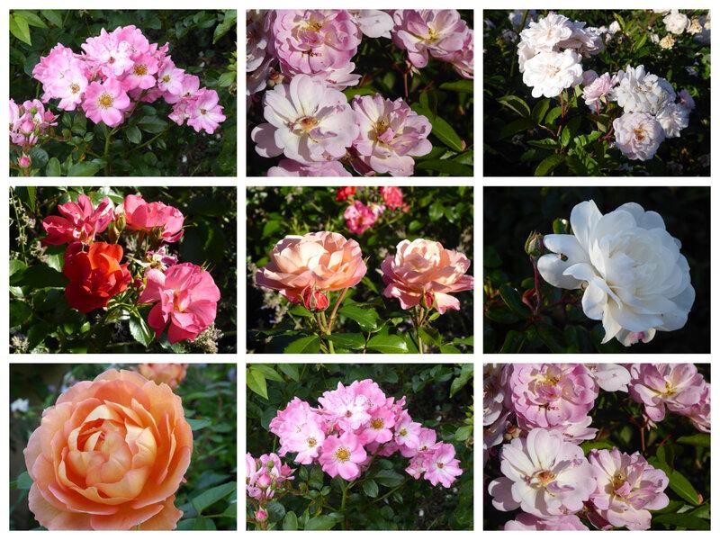rosesremon