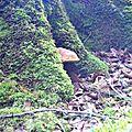 Cèpe d'été au creux de son hêtre...