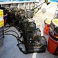 La pêche au casier...étrilles