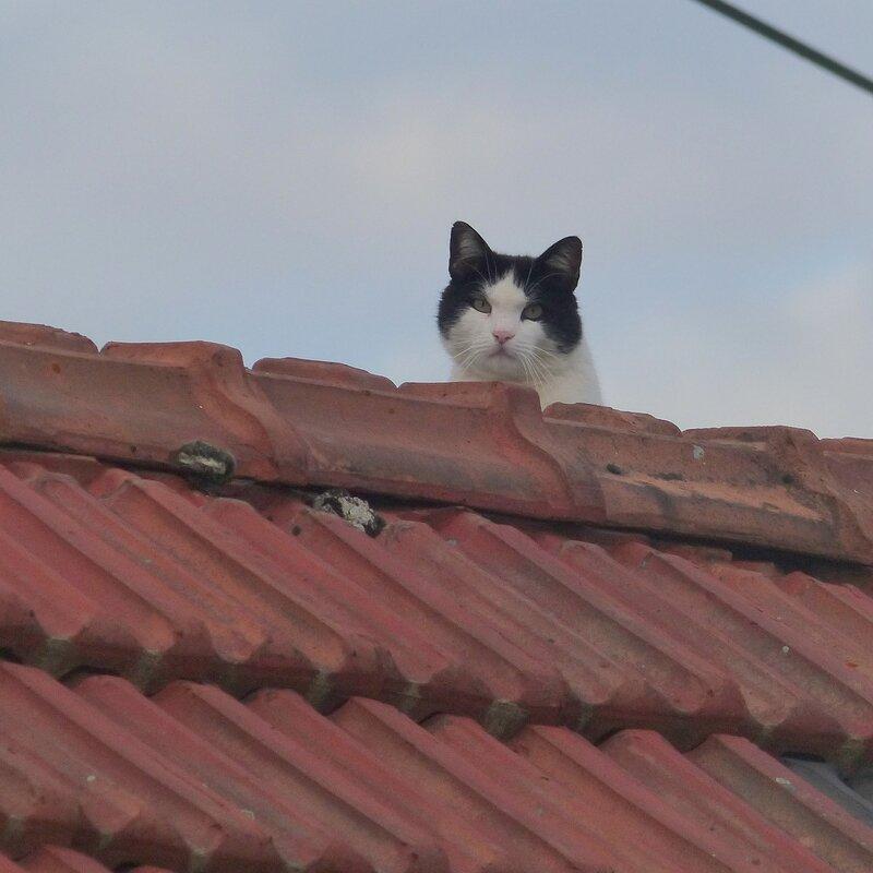 soir chat
