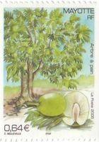 l_arbre___pain