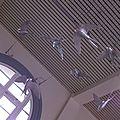 web vol d'hirondelle le Hangar